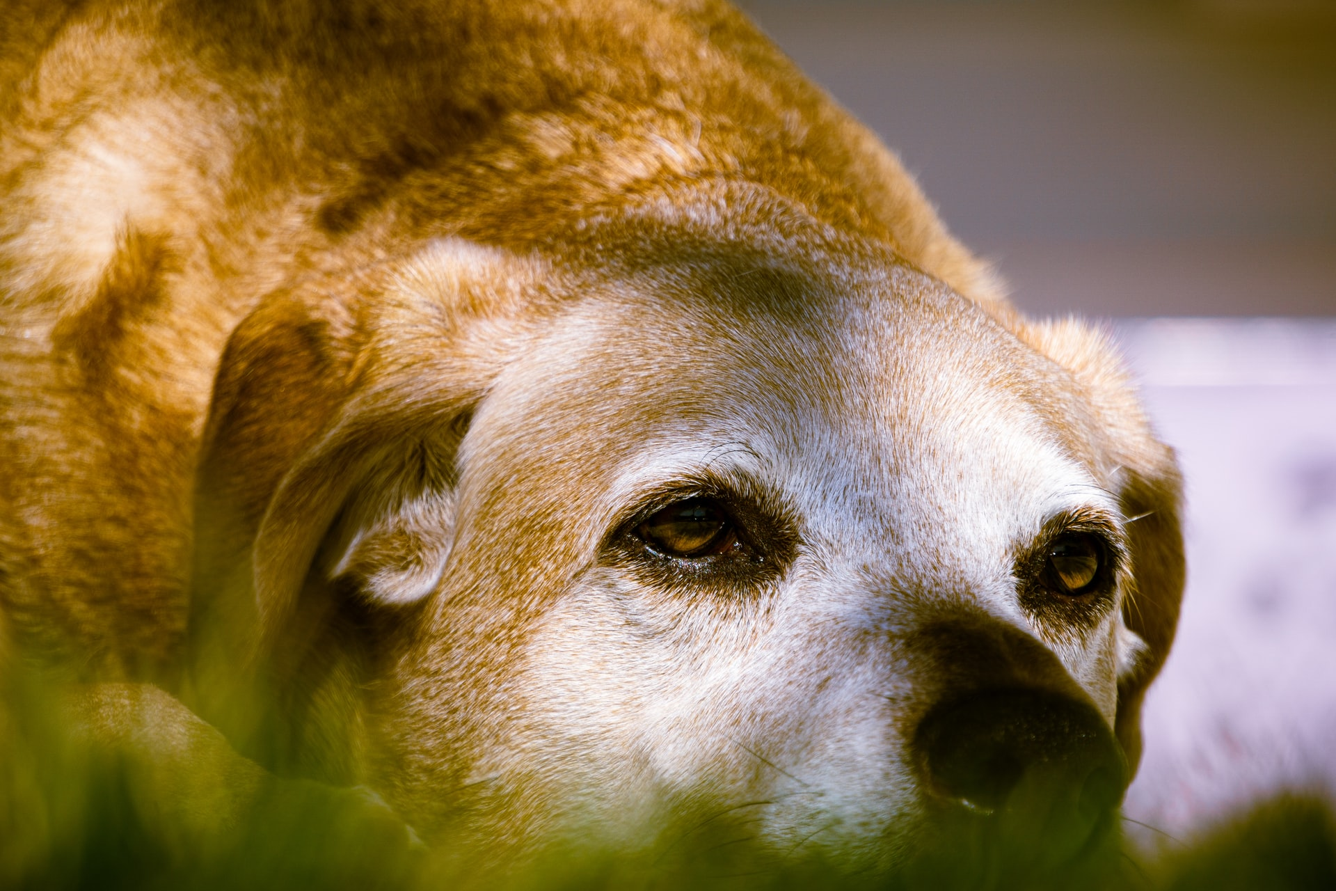 5 Common Health Issues Older Dogs Have to Face and How to Address Them