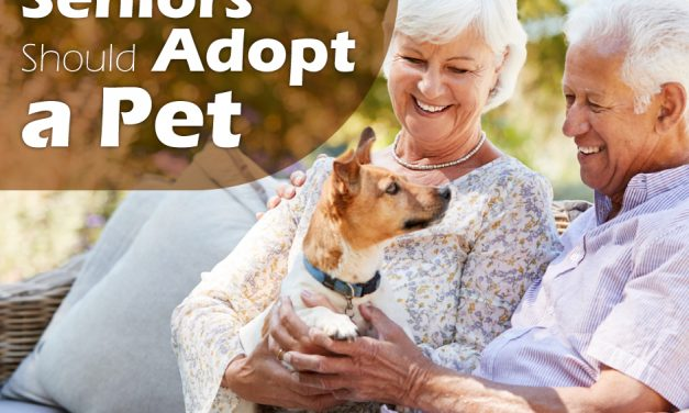 Top 5 Reasons Seniors Should Adopt a Pet