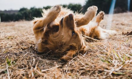 Tips to Look After Your Dog in Summer
