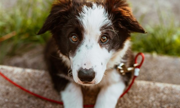 4 Great Ways To Spend Time With Your Pup